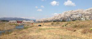 並木のつづく河川敷で続けられる汚染された下草刈り